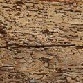 I tarli del legno: come trovarli, come eliminarli
