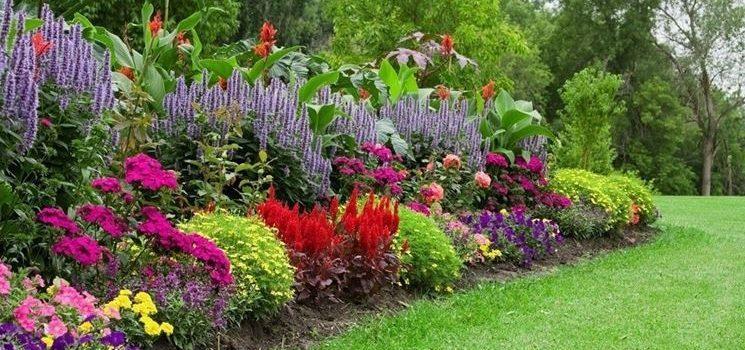 Piante da giardino: le 3 più facili da coltivare